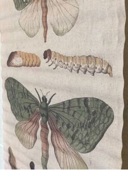 Landmark-Decor-Butterfly40x60-Canvas-2